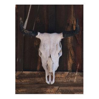 USA, Arizona. Skull On A Shop Wall Postcard