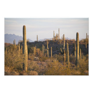 USA, Arizona, Sonoran Desert, Ajo, Ajo 2 Photo Print