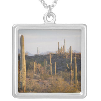 USA, Arizona, Sonoran Desert, Ajo, Ajo 2 Silver Plated Necklace