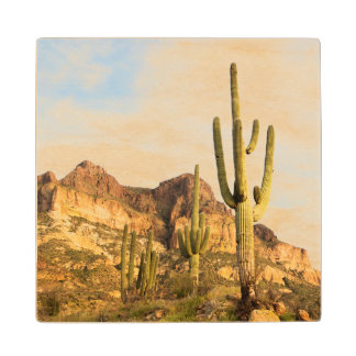 USA, Arizona, Tonto National Forest, Picketpost 2 Wood Coaster