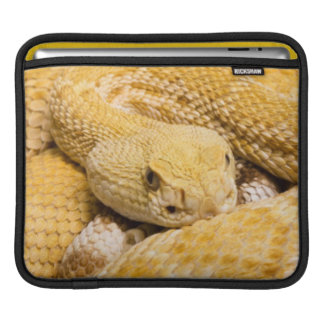 USA, Arizona, Tucson, Arizona-Sonora Desert 2 iPad Sleeve