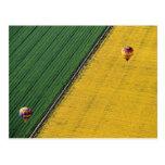 USA, Arizona, Val Vista. Hot-air balloons soar