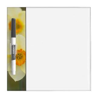 USA, Arlington, Virginia, closeup of white Dry Erase Board