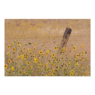 USA, California, Adin. Barbed-Wire Fence Poster
