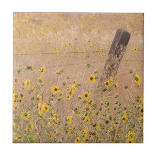USA, California, Adin. Barbed-Wire Fence Small Square Tile