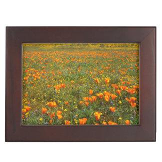 USA, California, Antelope Valley California Keepsake Box