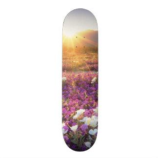 USA, California, Anza-Borrego Desert State Park. 2 20 Cm Skateboard Deck