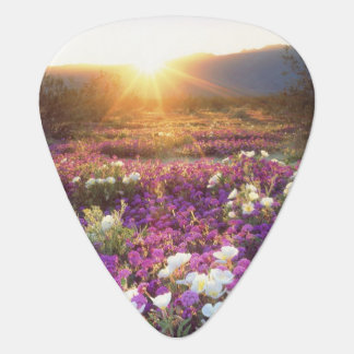 USA, California, Anza-Borrego Desert State Park. 2 Guitar Pick