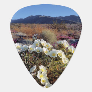 USA, California, Anza-Borrego DSP. Dune evening 2 Guitar Pick
