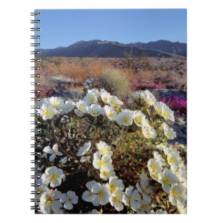 USA, California, Anza-Borrego DSP. Dune evening 2 Notebooks