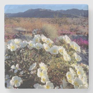 USA, California, Anza-Borrego DSP. Dune evening 2 Stone Coaster