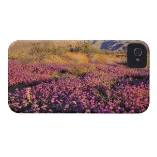 USA, California, Anza-Borrego DSP. Purple sand iPhone 4 Case