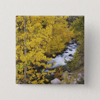 USA, California. Bishop Creek and aspen trees in 15 Cm Square Badge