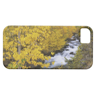 USA, California. Bishop Creek and aspen trees in iPhone 5 Case