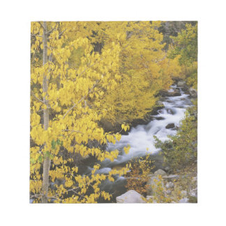USA, California. Bishop Creek and aspen trees in Notepad