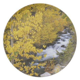 USA, California. Bishop Creek and aspen trees in Plate