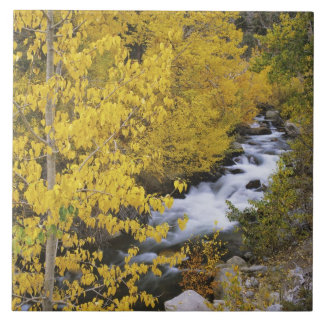 USA, California. Bishop Creek and aspen trees in Tile