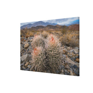 USA, California, Cactus in desert Stretched Canvas Print