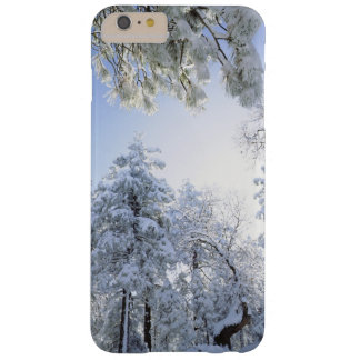 USA, California, Cleveland National Forest, Barely There iPhone 6 Plus Case