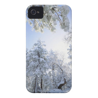 USA, California, Cleveland National Forest, iPhone 4 Case