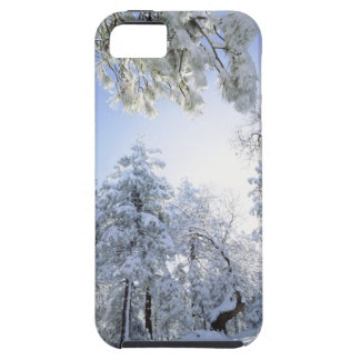 USA, California, Cleveland National Forest, iPhone 5 Case