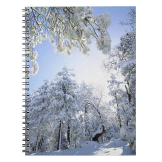 USA, California, Cleveland National Forest, Notebook