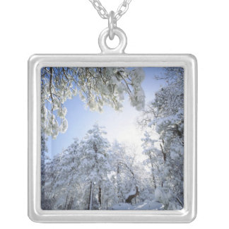 USA, California, Cleveland National Forest, Silver Plated Necklace