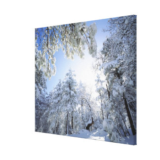 USA, California, Cleveland National Forest, Stretched Canvas Print