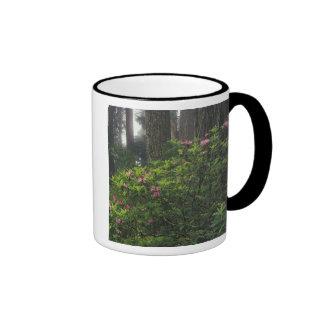 USA, California, Del Norte, Redwoods St. Park, Coffee Mug