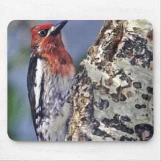 USA, California, Eastern Sierras, Lee Vining. Mouse Pad