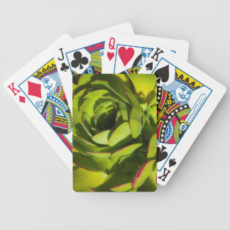 USA, California. Giant Lobelia Plant Close Up Bicycle Playing Cards