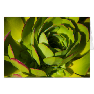 USA, California. Giant Lobelia Plant Close Up Card