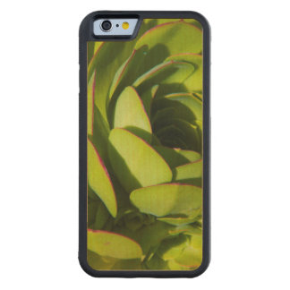 USA, California. Giant Lobelia Plant Close Up Carved Maple iPhone 6 Bumper Case