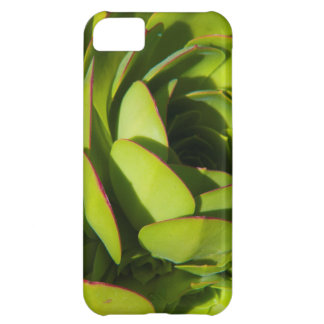 USA, California. Giant Lobelia Plant Close Up iPhone 5C Case