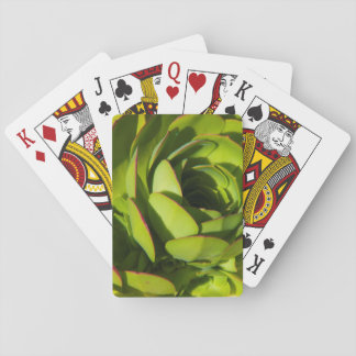 USA, California. Giant Lobelia Plant Close Up Playing Cards