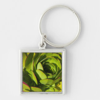 USA, California. Giant Lobelia Plant Close Up Silver-Colored Square Key Ring
