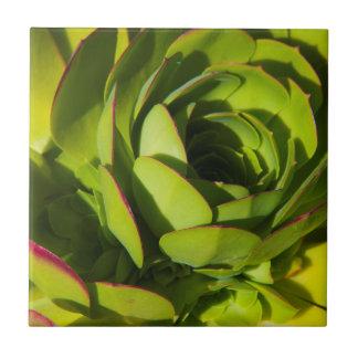 USA, California. Giant Lobelia Plant Close Up Tile