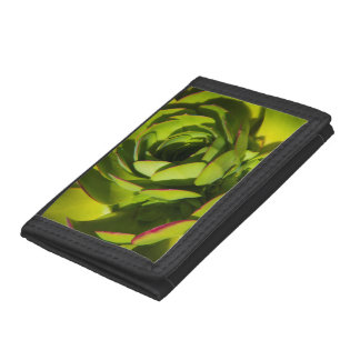 USA, California. Giant Lobelia Plant Close Up Trifold Wallet