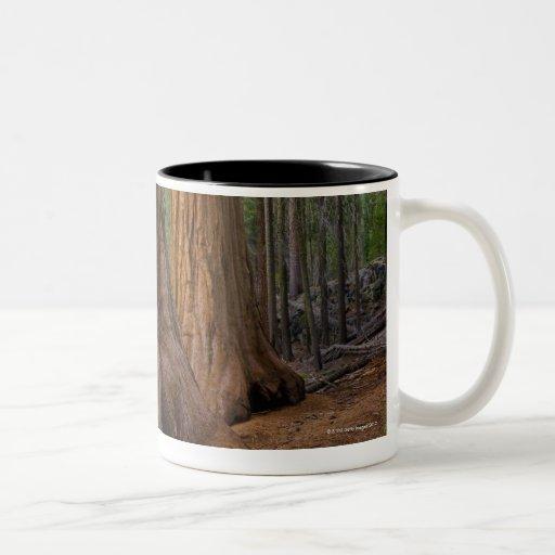 USA, California, Giant Sequoia tree Mug