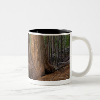 USA, California, Giant Sequoia tree Two-Tone Coffee Mug