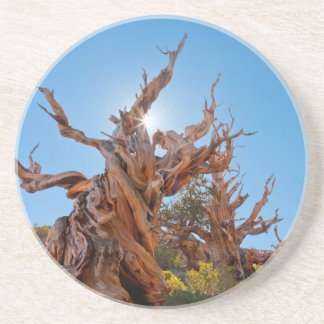 USA, California, Inyo National Forest 10 Coaster