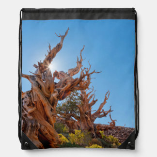USA, California, Inyo National Forest 10 Drawstring Bag