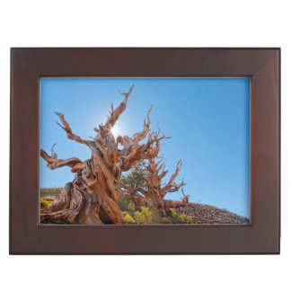 USA, California, Inyo National Forest 10 Keepsake Box