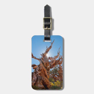 USA, California, Inyo National Forest 10 Luggage Tag