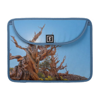 USA, California, Inyo National Forest 10 MacBook Pro Sleeves