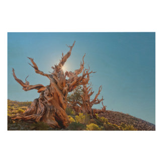 USA, California, Inyo National Forest 10 Wood Wall Decor