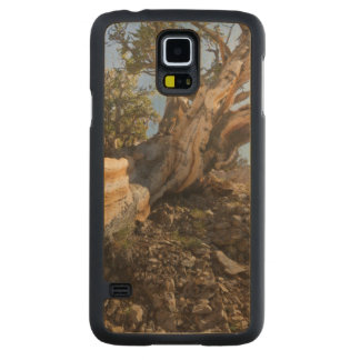 USA, California, Inyo National Forest 12 Carved Maple Galaxy S5 Case