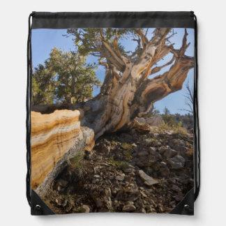 USA, California, Inyo National Forest 12 Drawstring Bag