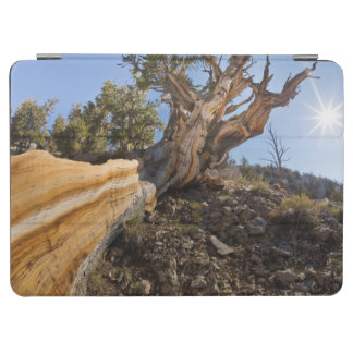 USA, California, Inyo National Forest 12 iPad Air Cover