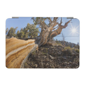 USA, California, Inyo National Forest 12 iPad Mini Cover